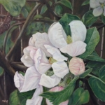 Jennifer Kwon, Apple Blossom, oil on canvas