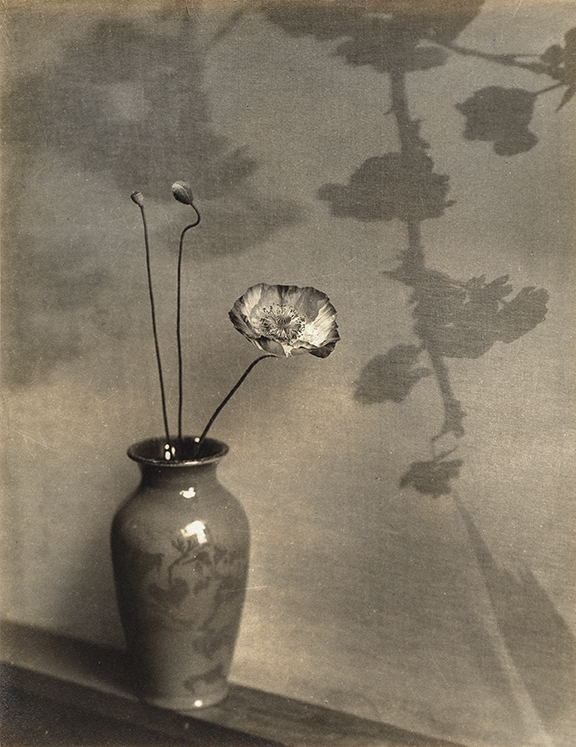 Captive Light: The Life and Photography of Ella E. McBride 6