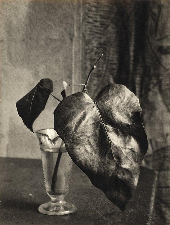 Captive Light: The Life and Photography of Ella E. McBride 5