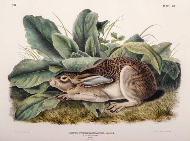 The Naturalist and the Trickster: Audubon/RYAN! 1