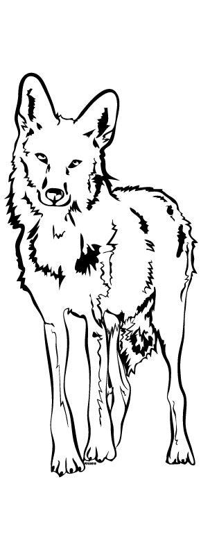 Coyote illustration from RYAN! Feddersen's