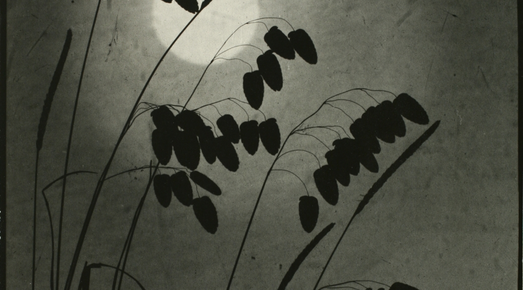 Black and white image of grasses silhouetted against the night sky and a full moon.