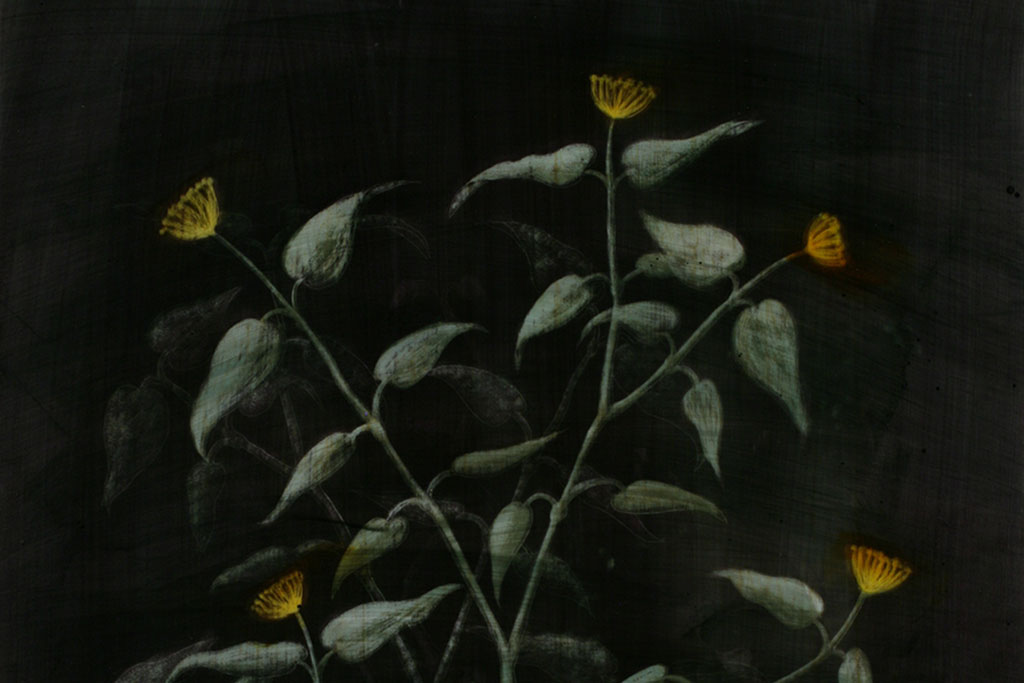 Image of a branching plant with gold flowers around the outside edges.